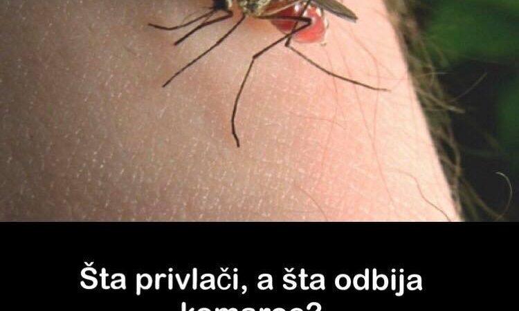 Pogledajte šta privlači a šta odbija komarce