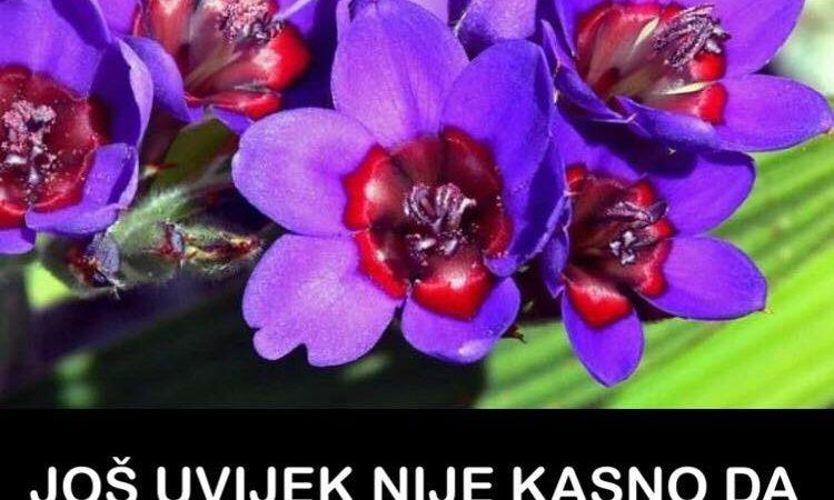 Pogledajte koje cvijeće možete da sadite i u junu